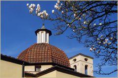 enfin les premiers magnolias.....