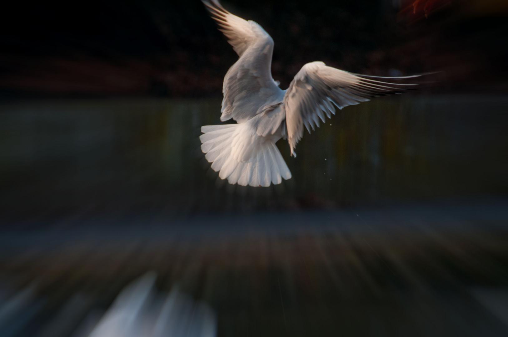 """""""Engel"""" auf der Flucht !"""
