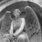 Engel Eltschig
