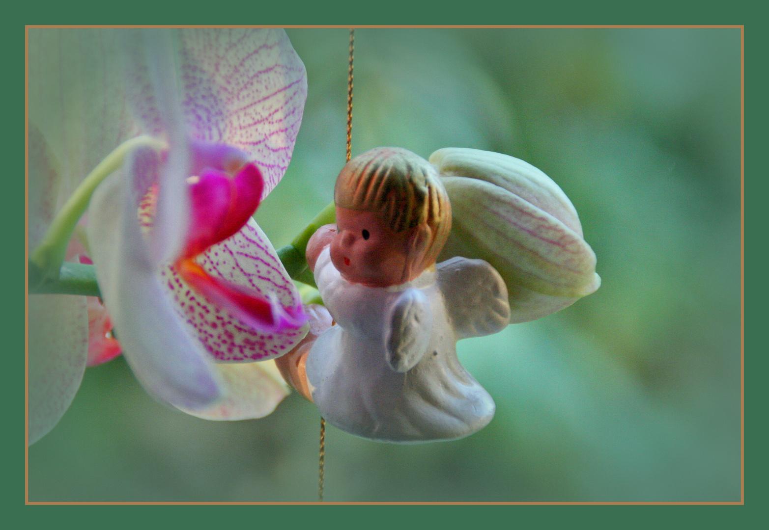 Engel trifft Orchidee...