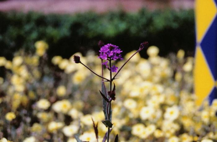 English Garden 3