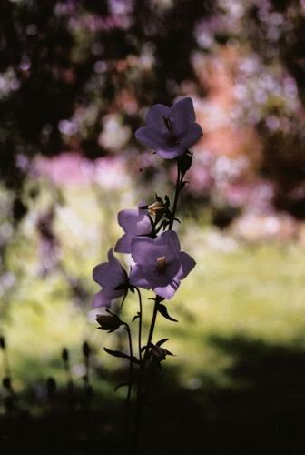 English Garden 4