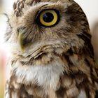English owl
