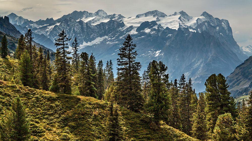 ENGSTLENPANORAMA der Berner Alpen