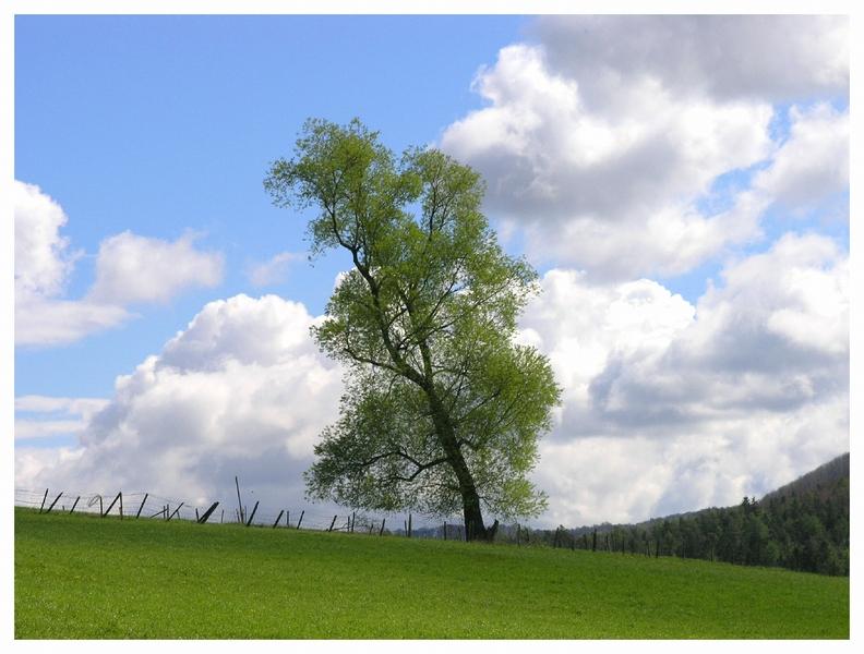 Eningen - Der einsame Baum