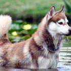 enjoying a swim