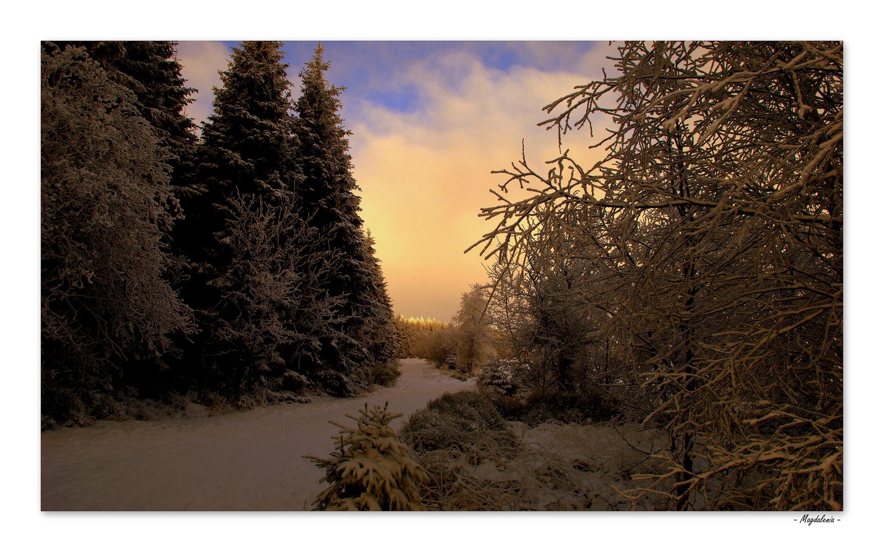 Enlacement hivernal