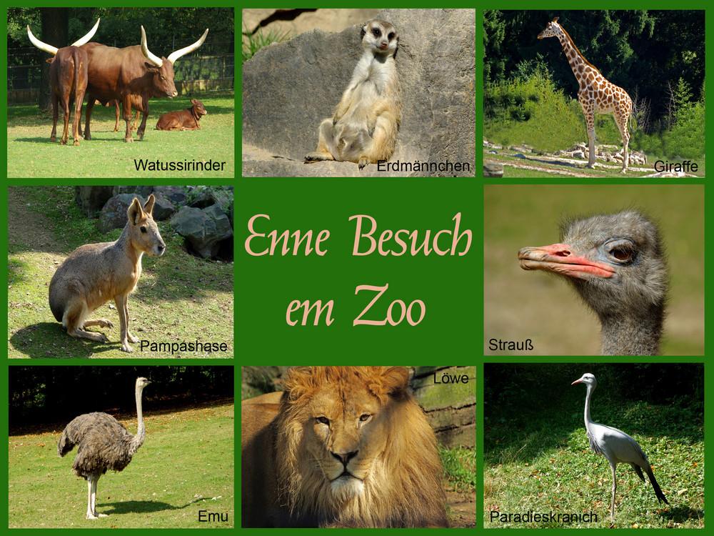 Enne Besuch em Zoo
