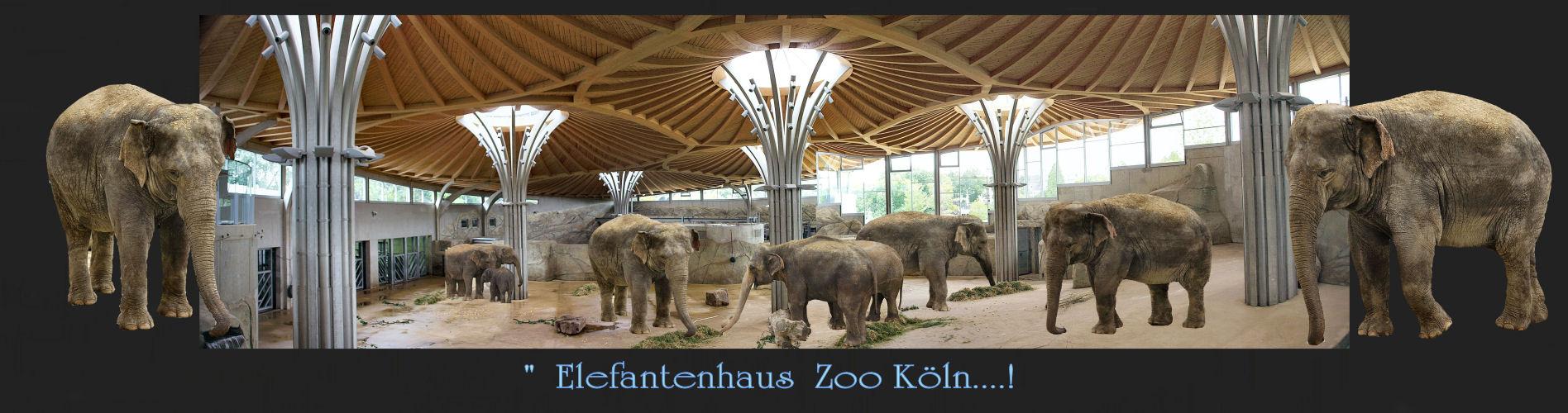""".......""""Enne Besuch im Zoo........""""!"""