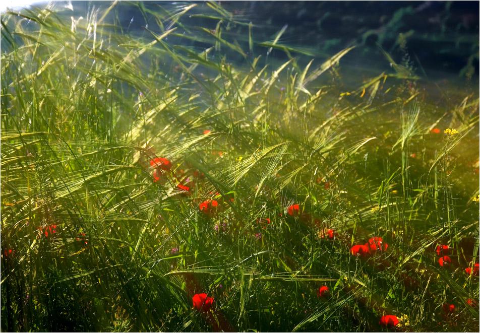 Entangled in the sunbeams