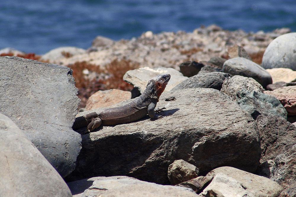 entdeckt auf Gran Canaria