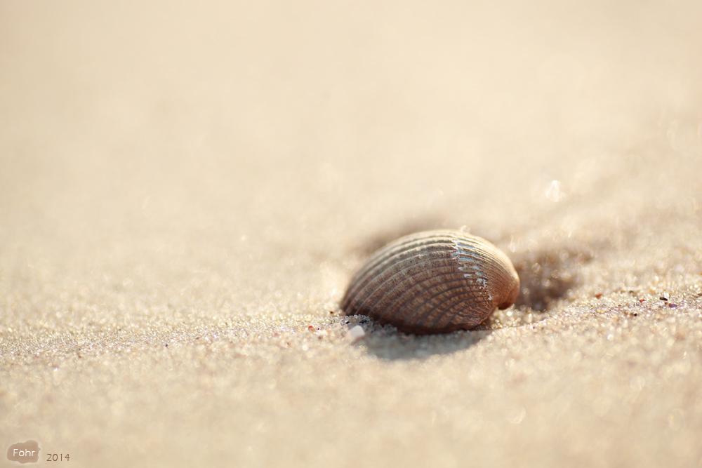 Entdeckung am Strand