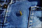 ..Entdeckung des Blauen Stoff`s...