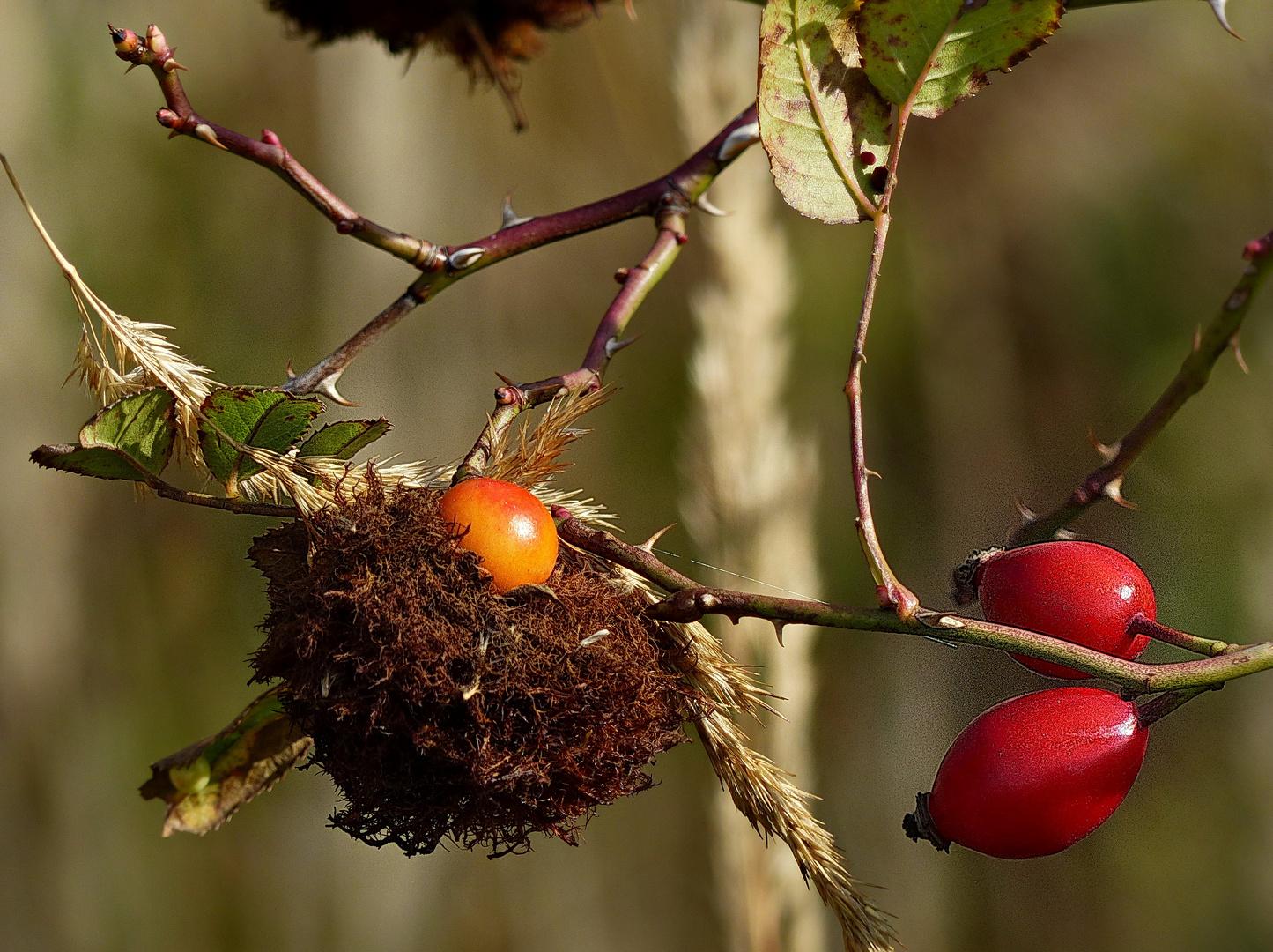 Entdeckung im Herbst