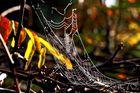 Entdeckungen im Herbstwald ...