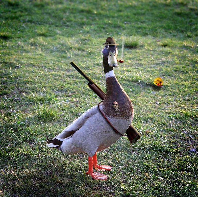 Lustige Enten Sprüche