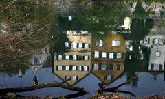Enten am Neckar