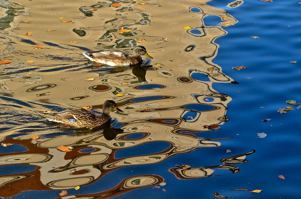 Enten im Farbenmeer