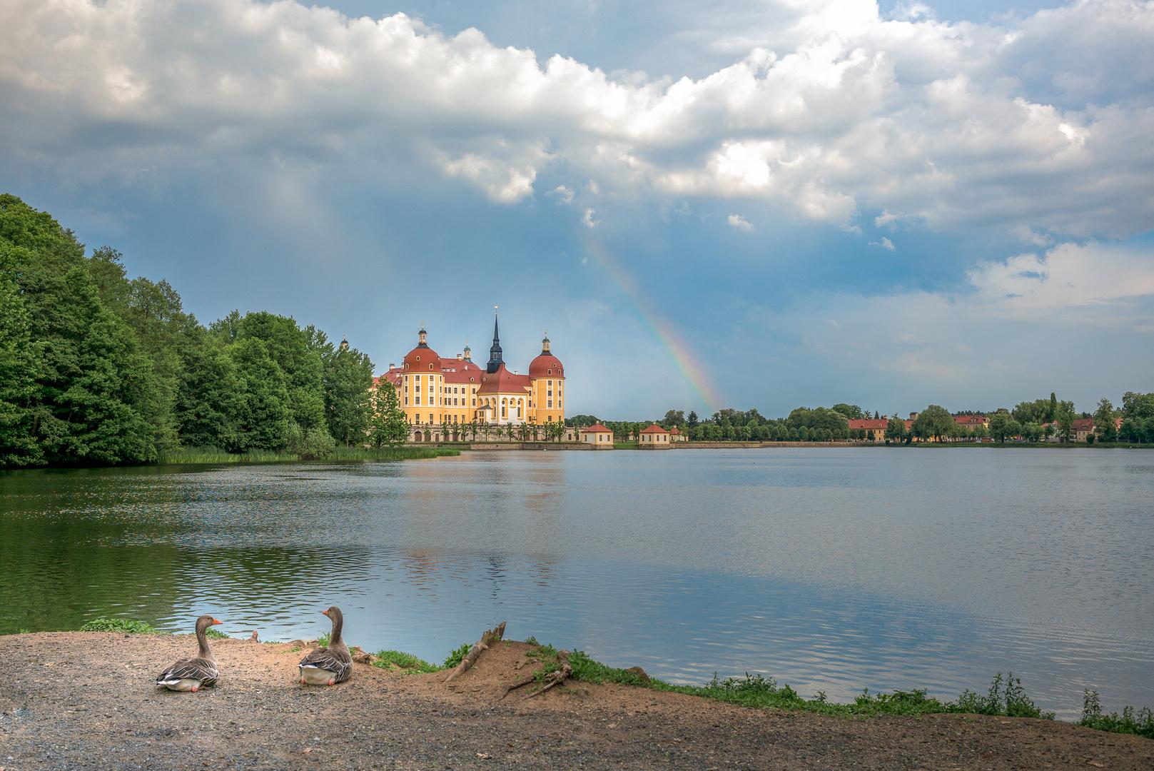 Enten lieben auch Regenbogen...