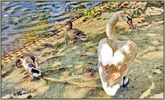 Entenvögel