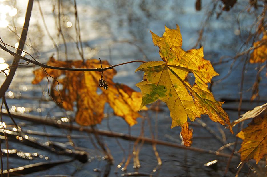 Entlang der Havel, 25.11.10 – 11