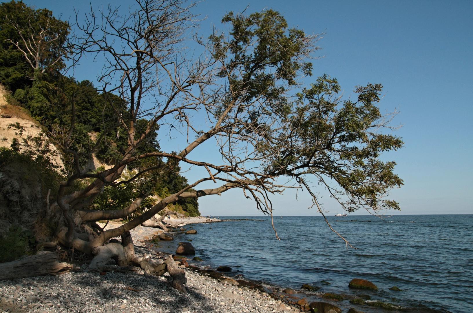 ...entlang der Kreideküste 4