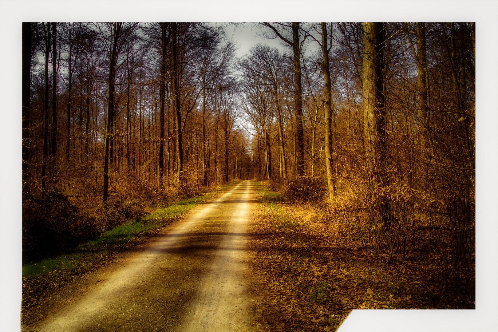 Entlang des Waldweges im Frühling