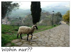 entlaufenes Schaf