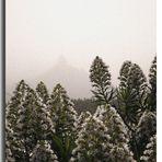 Entre cailma (la niebla canaria)