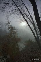 entre la niebla