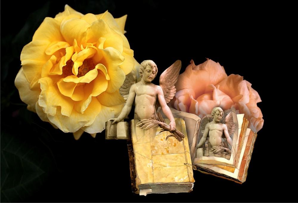 Entre libros y rosas