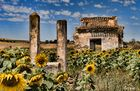 Entre ruinas