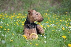 Entspannen auf der Blumenwiese