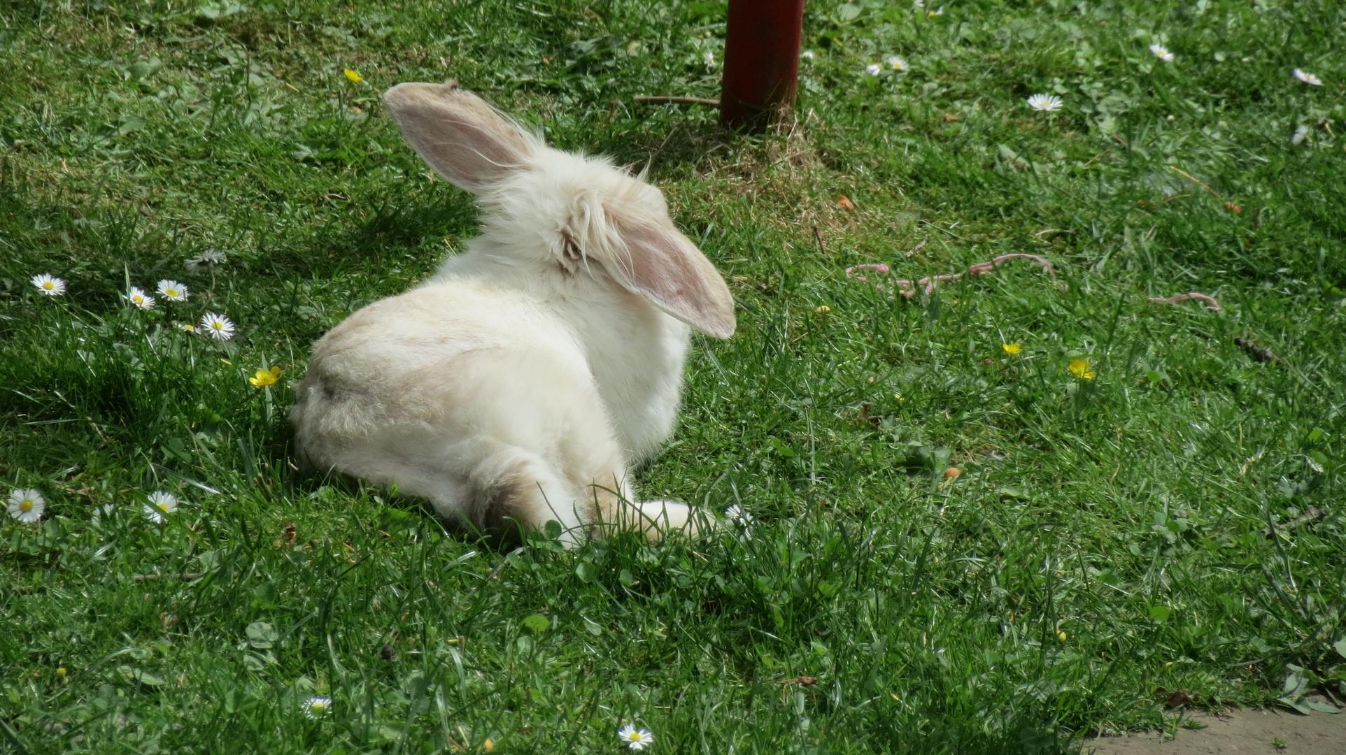 Entspannt In Der Sonne Liegen Foto Bild Tiere Haustiere
