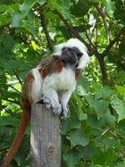 entspannte Begegnung in Tierpark Herberstein