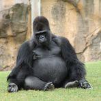 Entspannter Gorilla