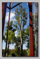 Entweder Baum oder Gerüst schief