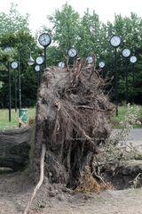 entwurzelter Baum im Uhrenpark Düsseldorf Volksgarten