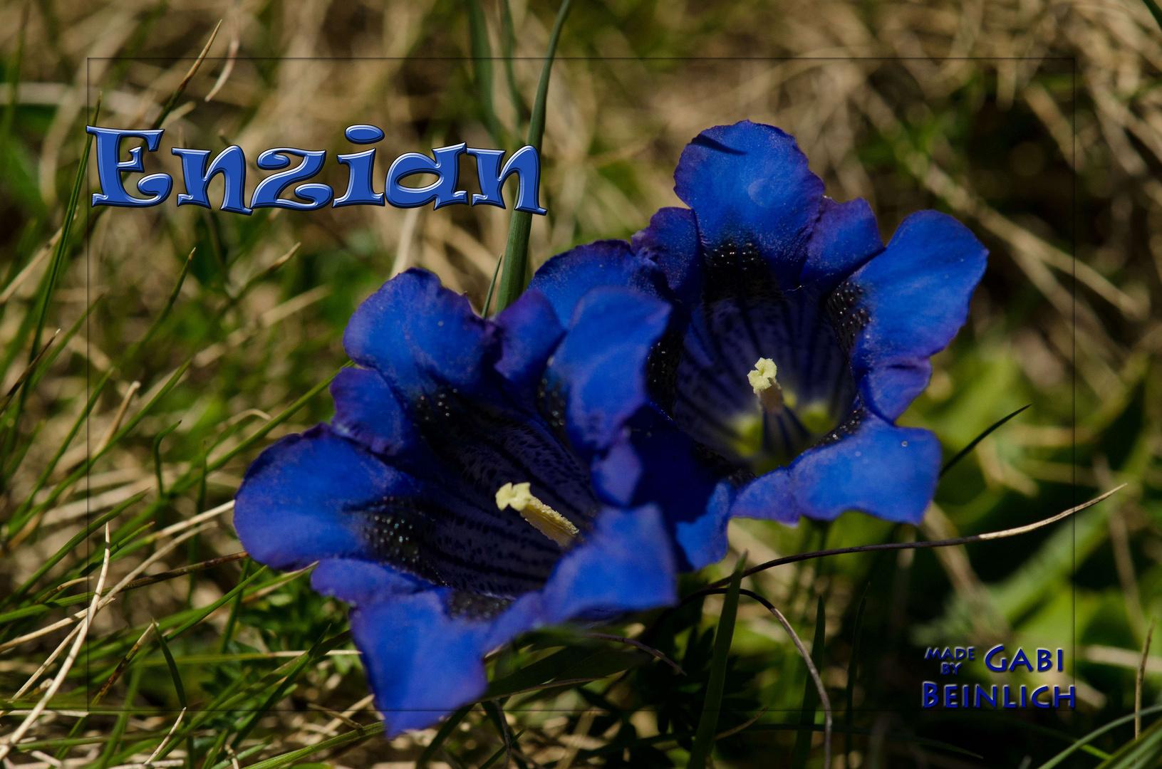 Enzian