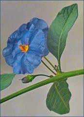 """""""Enzianblau""""- auch an grauen Tagen draußen...macht sich immer gut ;-),"""