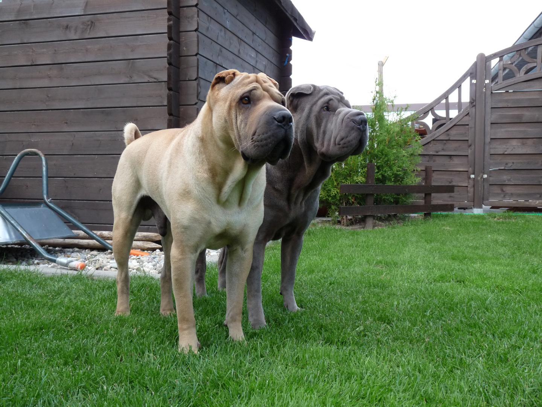 Enzo und Louis zwei dicke Freunde