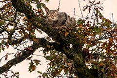EOS detected Wildcat