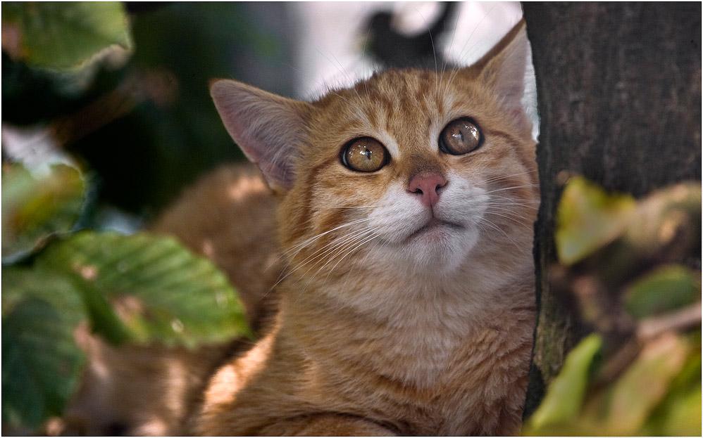 EOS meets Wildcat! :-))