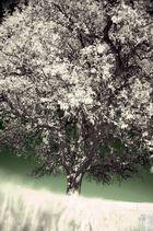 Ephemeral Tree