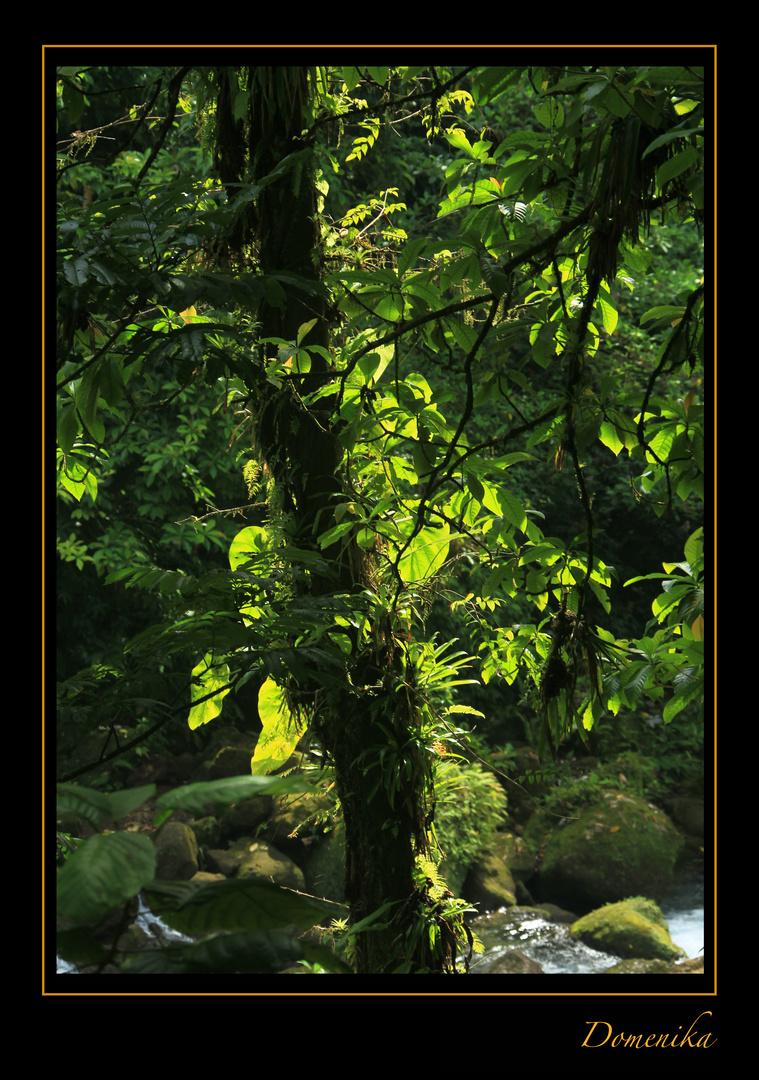 Epiphyten