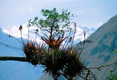 Epiphytische Pflanzen