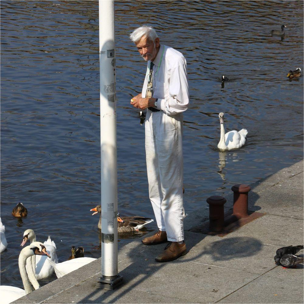 Er füttert täglich seine Schwäne - Hamburg Innenalster