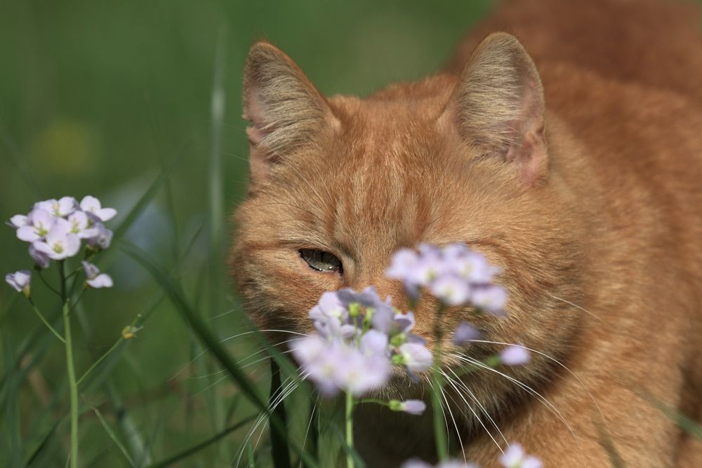 Er sagt es durch die Blume