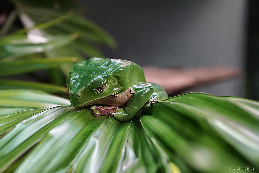 Er schläft, der Frosch. Foto & Bild | tiere, zoo, wildpark