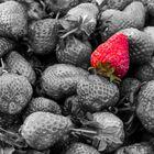 Erdbeeren - Schwarz/Weiss mit Farbtupfer